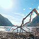 Broken Branch Sea - VideoHive Item for Sale