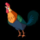 Colorful Rooster Crows. Classic handmade Animation with Alpha Channel. - VideoHive Item for Sale