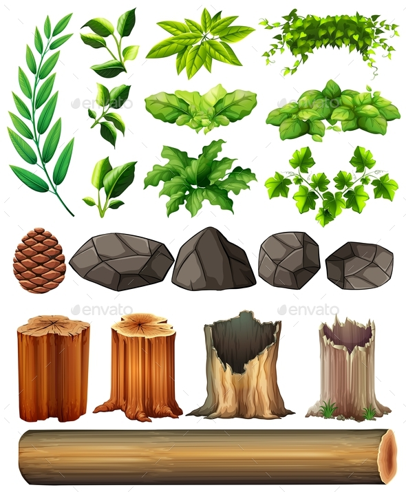 Different Types of Leaves and Rocks - Flowers & Plants Nature