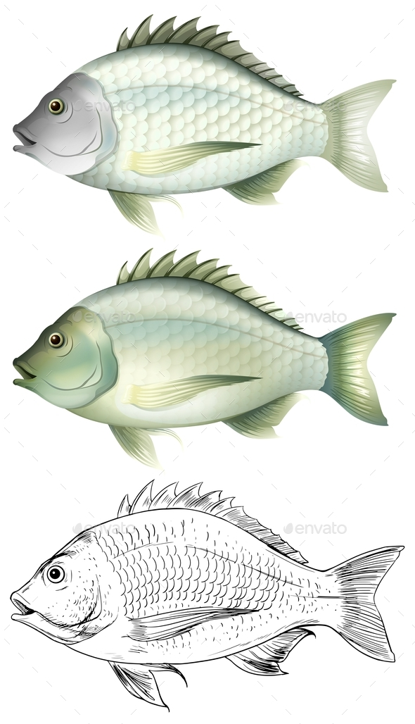 Different Drawing of the Same Fish - Animals Characters