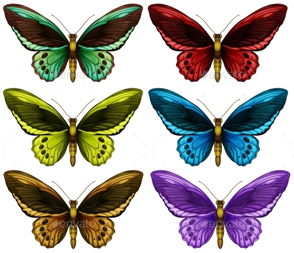 Monarch Butterflies in Six Different Color Wings - Miscellaneous Conceptual