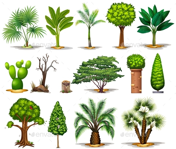 Different types of trees by blueringmedia graphicriver for Different kinds of plants