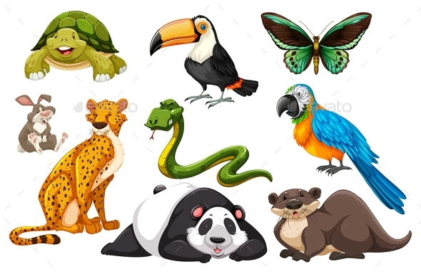 Different Kinds of Wild Animals - Animals Characters
