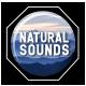 Jungle Ambient Sounds