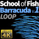 School of Fish Barracuda-1 - VideoHive Item for Sale