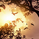 Sunset Jungle With Birds Flying Past - VideoHive Item for Sale