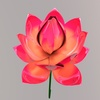 Lotus590 2 0025.  thumbnail