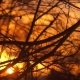 The Bare Branches at Sunset - VideoHive Item for Sale