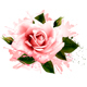 Flower Background with a Pink Rose - GraphicRiver Item for Sale