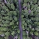 Top Down Moving Aerial View of a Road Through Forest with a Car Driving Nulled