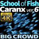 School of Fish Caranx-6 - VideoHive Item for Sale