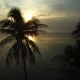 Silhouettes of Palm Trees on Beach at Sunset. . - VideoHive Item for Sale