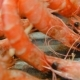 Skewers of Shrimp Invert Grilled