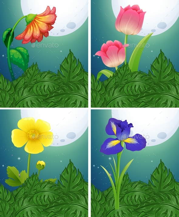 Different Types of Flowers on Fullmoon Night - Flowers & Plants Nature