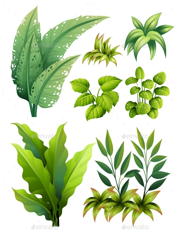 Different Types of leaves - Flowers & Plants Nature