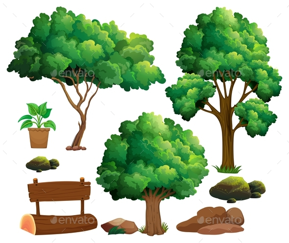 Different Types of Trees and Garden Elements - Flowers & Plants Nature