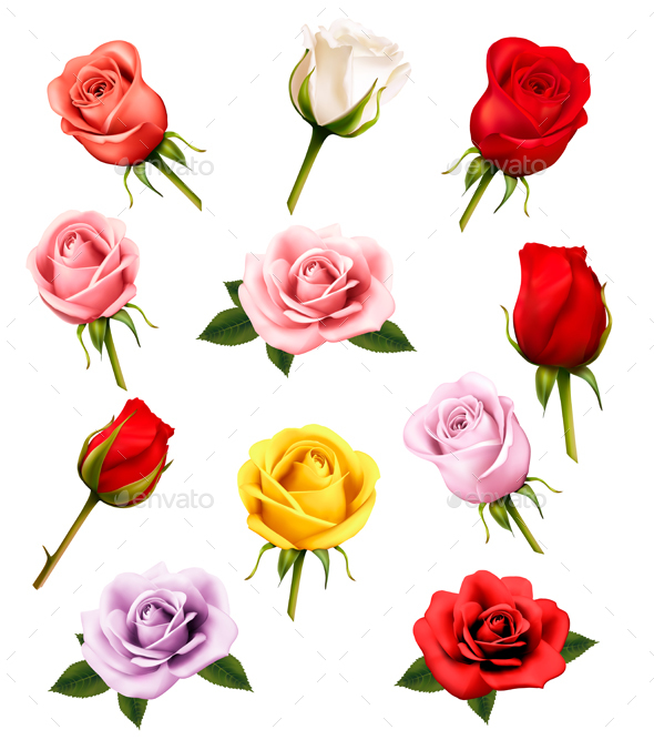 Set Of Different Roses. Vector. - Flowers & Plants Nature