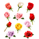 Set Of Different Roses. Vector. - GraphicRiver Item for Sale
