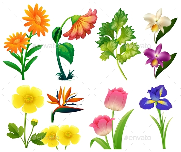 Different Types of Wild Flowers - Flowers & Plants Nature