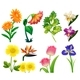 Different Types of Wild Flowers - GraphicRiver Item for Sale