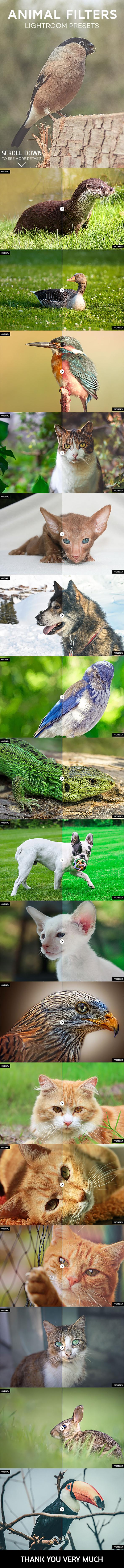 17 Animal Photography Lightroom Presets - Lightroom Presets Add-ons