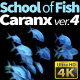 School of Fish Caranx-4 - VideoHive Item for Sale
