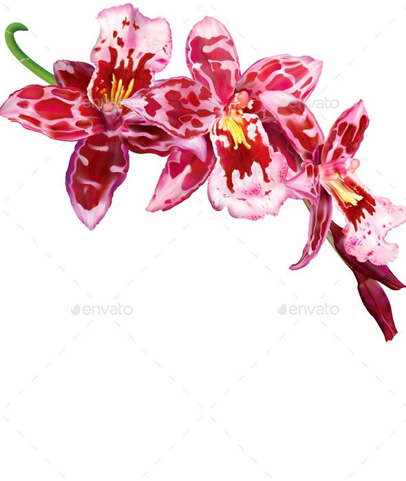 Beallara Orchid Flower - Flowers & Plants Nature