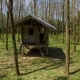 Aerial: Abandoned Hut in a Rubber Tree Grove. Hevea.