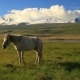 White Horse on a Green Meadow in Mountains