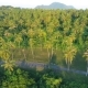 Coconut Palm Trees Plantation on Phuket Island. Tropical  Aerial Birds-eye Scene View. Thailand. - VideoHive Item for Sale