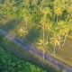 Small Path at Coconut Palm Trees Plantation on Phuket Island. Tropical  Aerial Birds-eye Scene Vie - VideoHive Item for Sale
