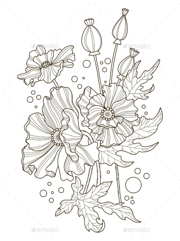 Poppy Flowers Coloring Book Vector Illustration - Flowers & Plants Nature