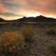 Blooming Desert at Sunset. Mongolia, Gobi - VideoHive Item for Sale