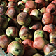 Bruised apples - 3DOcean Item for Sale