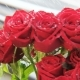 Red Roses Rotating in the Rain