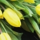 Yellow Tulips in the Rain - VideoHive Item for Sale