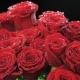 Red Roses Moving - VideoHive Item for Sale