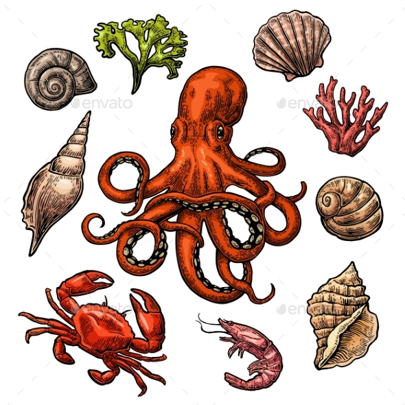 Set Sea Shell, Coral, Crab, Shrimp and Octopus. - Animals Characters