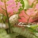 Butterfly on Leaf  Insect Life in the Tropical Rain Forest. Malaysia. Natural Background. - VideoHive Item for Sale