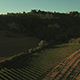 Aerial Shot of Vineyards in Tuscany - VideoHive Item for Sale