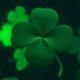 Clover Background - VideoHive Item for Sale