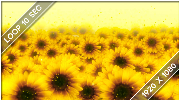 Flowers Sunflower Show 3 19458988
