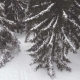 AERIAL: Snowy Forest - VideoHive Item for Sale