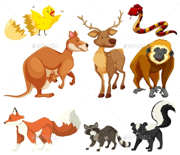 Different Types of Animals - Animals Characters