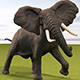 African Elephant - 3DOcean Item for Sale