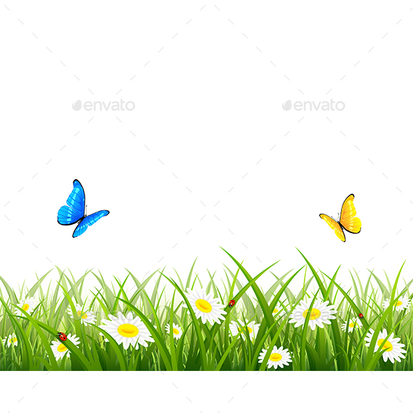 Butterflies Flying over Grass and Flowers - Seasons Nature