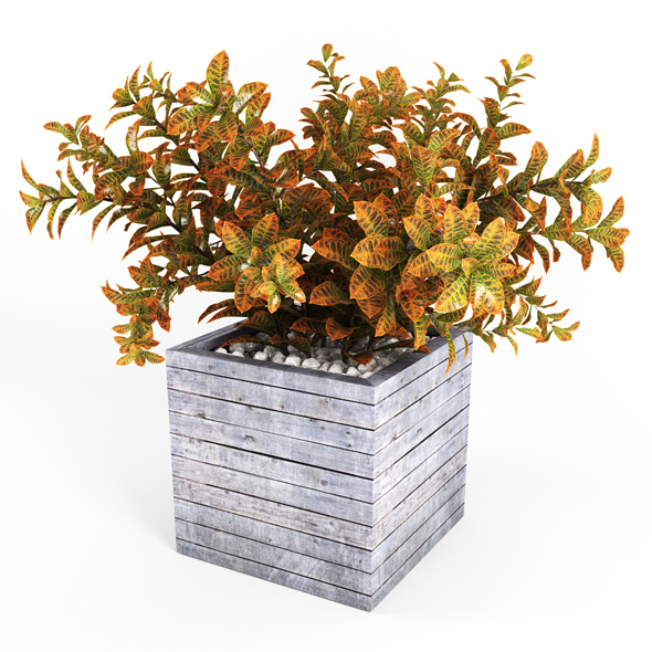 Croton tree - 3DOcean Item for Sale