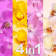 Flowers Orchid (4-Pack) - VideoHive Item for Sale
