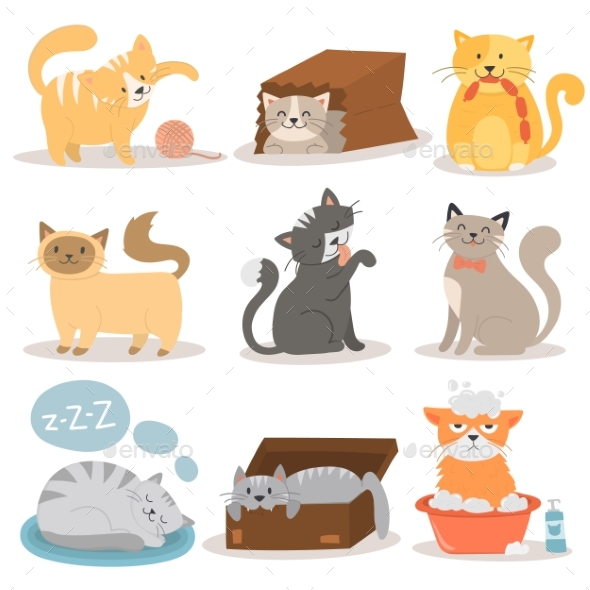 Cats Character Set - Animals Characters