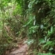 Walking on a Path in the Tropical Jungle Forest